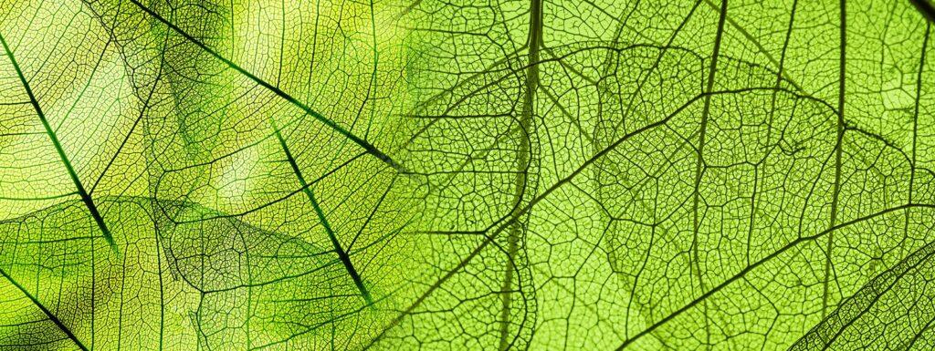 Mehr Grün um das Haus