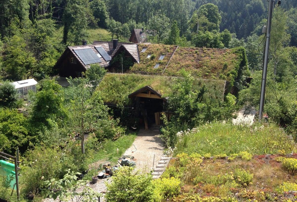 Dachbegrünung Biohof Albisboden
