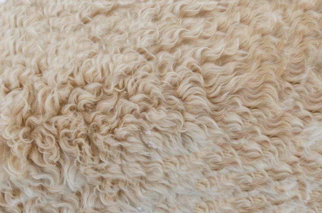 Schafwolle als Dämmung