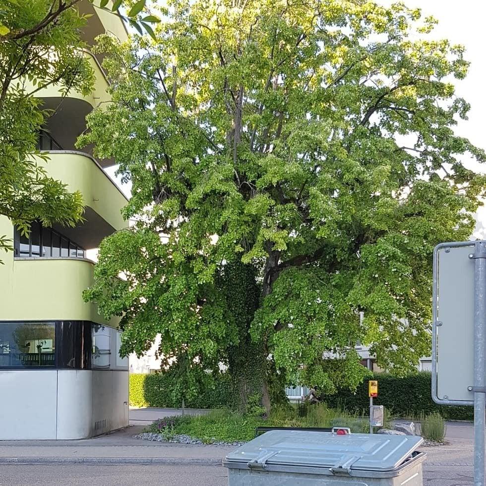 Baum neben Haus